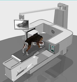 veterinary case studies