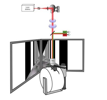 3cc767bdfcb1 Monitoring Activity in the Brain s Visual Cortex in Virtual Reality  Environments